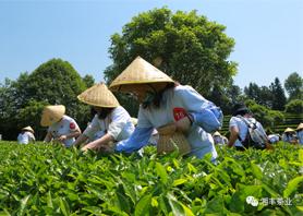 花开疫散,与春同行——长沙县2020年第六届茶文化旅游节在湘丰茶业庄园盛大开幕